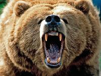 تکه تکه شدن یک مادر و دختر توسط خرس