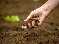 غفلت از میزان خسارت به خاک کشاورزی در سیل اخیر