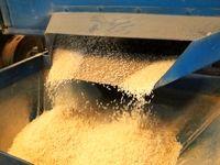 عرضه برنج با قیمت مصوب بدون محدودیت/ عدم افزایش قیمت تخممرغ