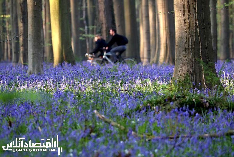 بهشت آبی