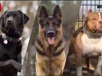 حیوانات وحشی در آغوش انسانها! +فیلم