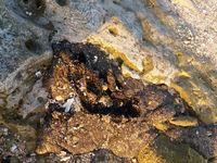 بازگشت آلودگیهای نفتی به سواحل قشم با منشاء نامعلوم