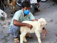 بازار فروش حیوانات +عکس