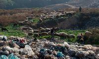 مناقشه زباله در شمال