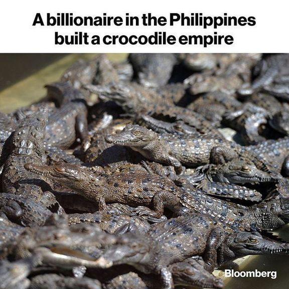 سرمایهگذاری میلیاردر فیلیپینی روی پرورش تمساح!