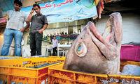 کاهش ۴۰درصدی فروش ماهی