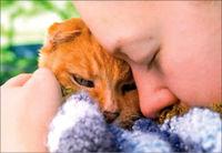 اشکهای عجیب در فراق سگ و گربه!
