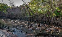 تخلفات گسترده در بازار فروش پرندگان - فریدونکنار +عکس