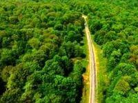 تخریب جنگلهای هیرکانی قانونی میشود؟