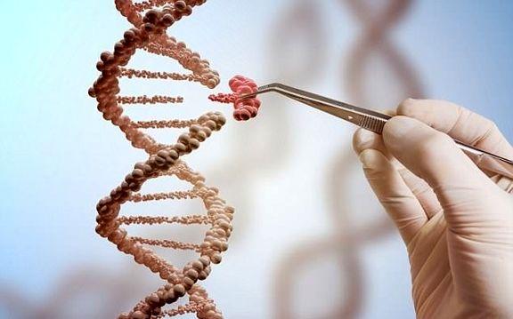 پولدار شدن ژنتیکی است!