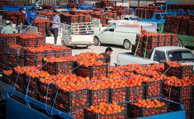 ندادن فاکتور و سودجویی دلالان عوامل اصلی گرانی میوه است