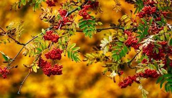 پاییز طلایی در سنت پترزبورگ +تصاویر