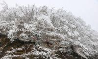 بارش برف در رامسر +عکس