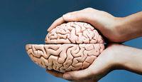 کدام منطقه از مغز با افزایش سن بیشتر در معرض کوچک شدن است؟
