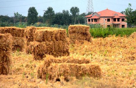 پروژه مرکز تحقیقات مناطق خشک در زمینهای کشاورزی