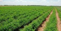 وضعیت تولید در بخش کشاورزی چگونه است؟