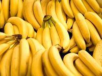 واردات موز به کشور ۳۸درصد کم شد