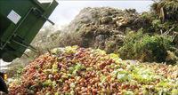 تبدیل ۳۰درصد محصولات کشاورزی به ضایعات