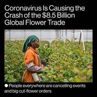 صنعت گل و گیاه جهان بهخاطر کرونا چقدر ضرر کرد؟ +تصاویر
