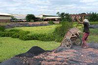 بلایی که خشکسالی بر سر کشاورزان کامبوج آورد +تصاویر