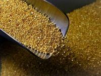 بزرگترین ریزش قیمت طلا در هفت سال اخیر