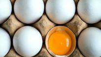 صدور مجوز واردات تخممرغ در شرایط مازاد تولید