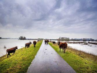سیل در هلند