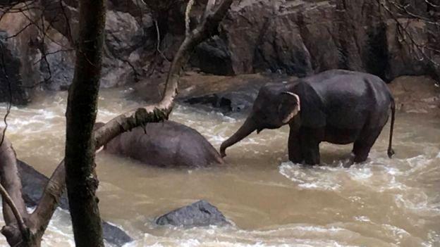 (تصاویر) مرگ ۶ فیل بر اثر سقوط از آبشاری در تایلند