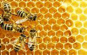 با زنبورداری میلیونر شوید