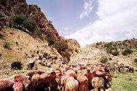 کوچ عشایر +تصاویر