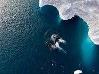 شنای نهنگ مادر با فرزندش در آبهای قطبی +عکس