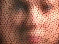 زنبورها قادر به تشخیص چهره انسانها هستند