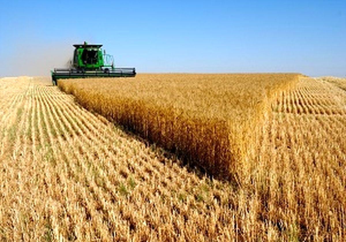 گرانفروشی گندم ربطی به دولت ندارد