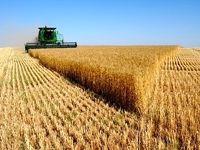 نرخ خرید تضمینی ۲۵محصول کشاورزی تصویب و ابلاغ شد