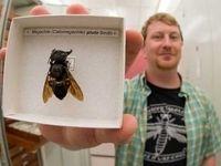 بزرگترین زنبور جهان کشف شد +عکس