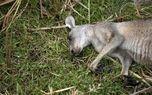 عکسهای تکاندهنده از آتش سوزی استرالیا