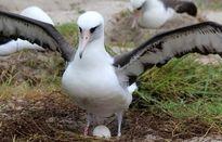 پرنده 68ساله دوباره مادر میشود +عکس