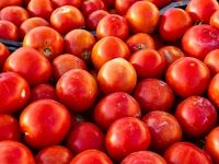 گوجهفرنگی دردسر ساز