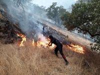 حدود ۸۰هکتار از اراضی کوه سیاه بوشهر طعمه حریق شد