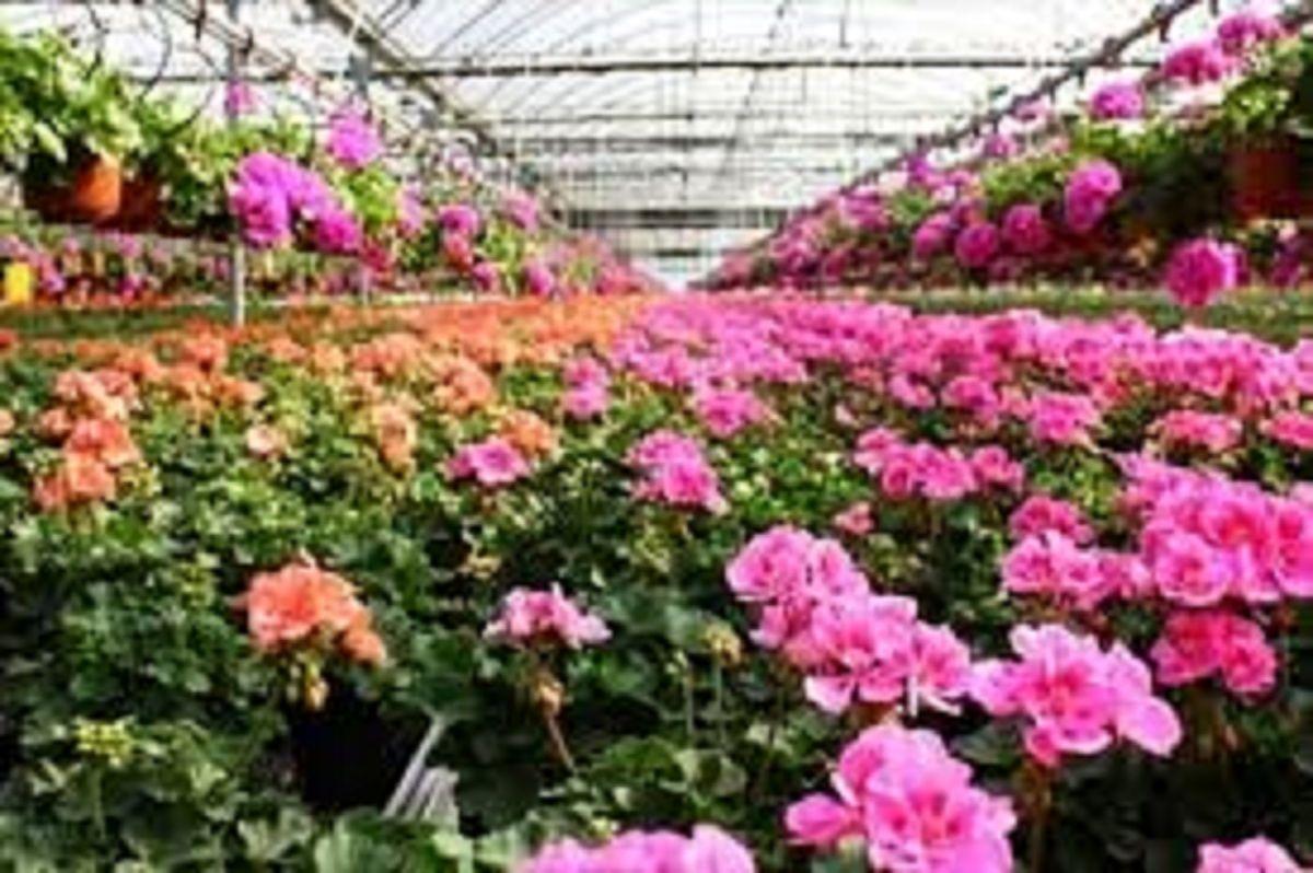تغییر رنگ گلها در واکنش به گرمایش زمین! +عکس