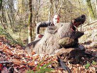 ممنوعیت شکار در جنگلهای شمال تا پایان1404