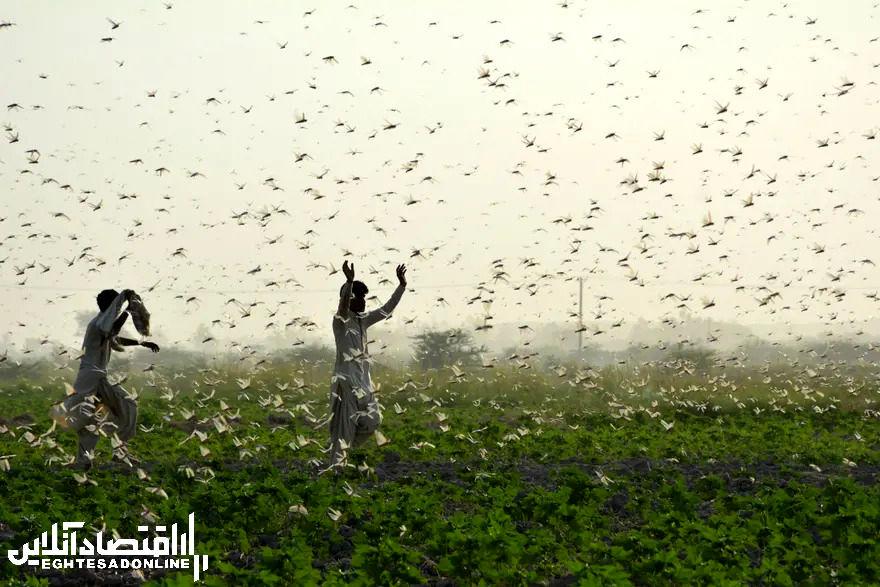 برترین تصاویر خبری ۲۴ ساعت گذشته/ 12 تیر