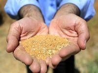 واردات ۲میلیون و ۱۳۳هزار تن دانه روغنی به کشور