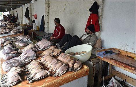 نسل کشی پرندگان