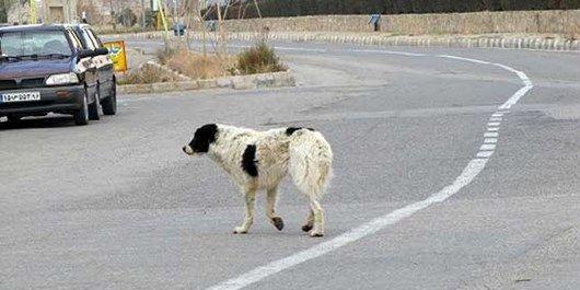 نبود نظارت صحیح بر پیمانکار نگهداری سگهای شهری