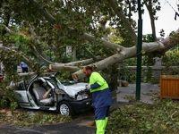 سقوط درخت در اثر طوفان در تهران +تصاویر
