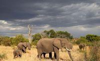 سفر به حیات وحش تانزانیا +تصاویر