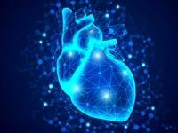 با دیدن این قلب شگفت زده میشوید +عکس