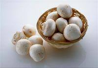 سرانه قارچ خوراکی در کشور پائین است