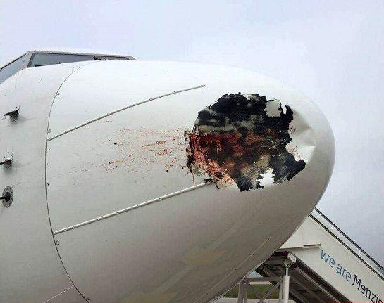 نتیجه برخورد پرنده با هواپیما +عکس